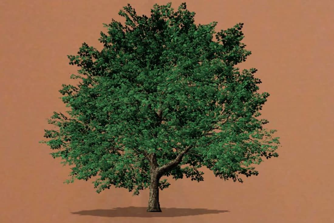 'Sessile Oak Tree' Instagram AR Filter | EcoTree